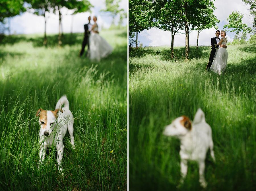 bröllopsfoto Ullared brudpar och hund