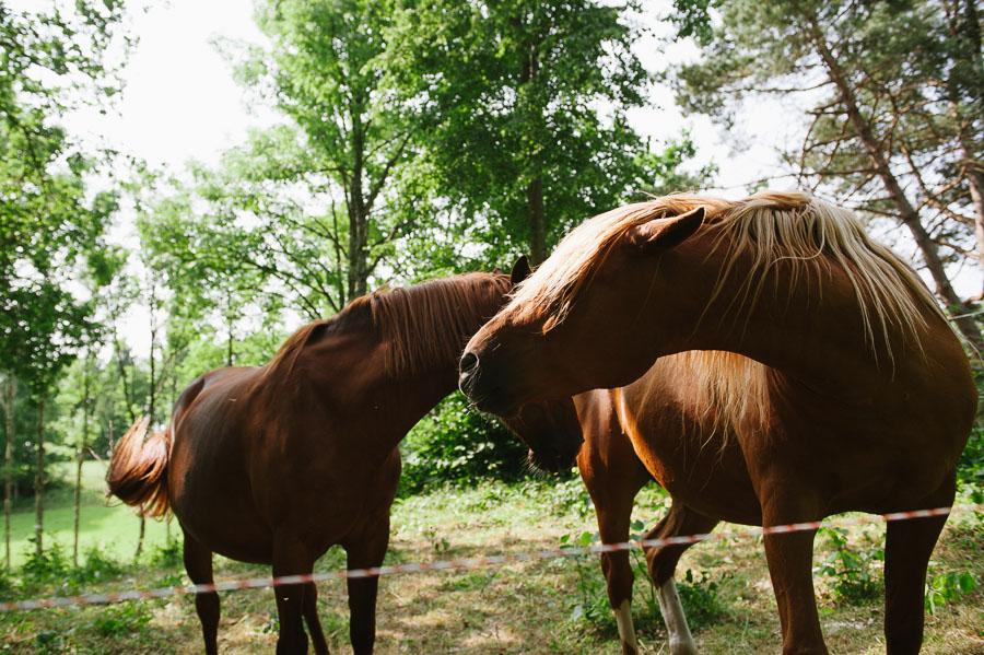 Bröllopsfotograf Backa Loge - miljöbild hästar
