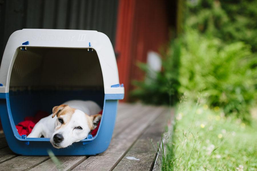 Bröllopsfotograf Backa Loge - miljöbild hund